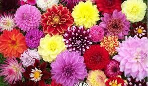 FLOWERS: SEEDS AND BULBS